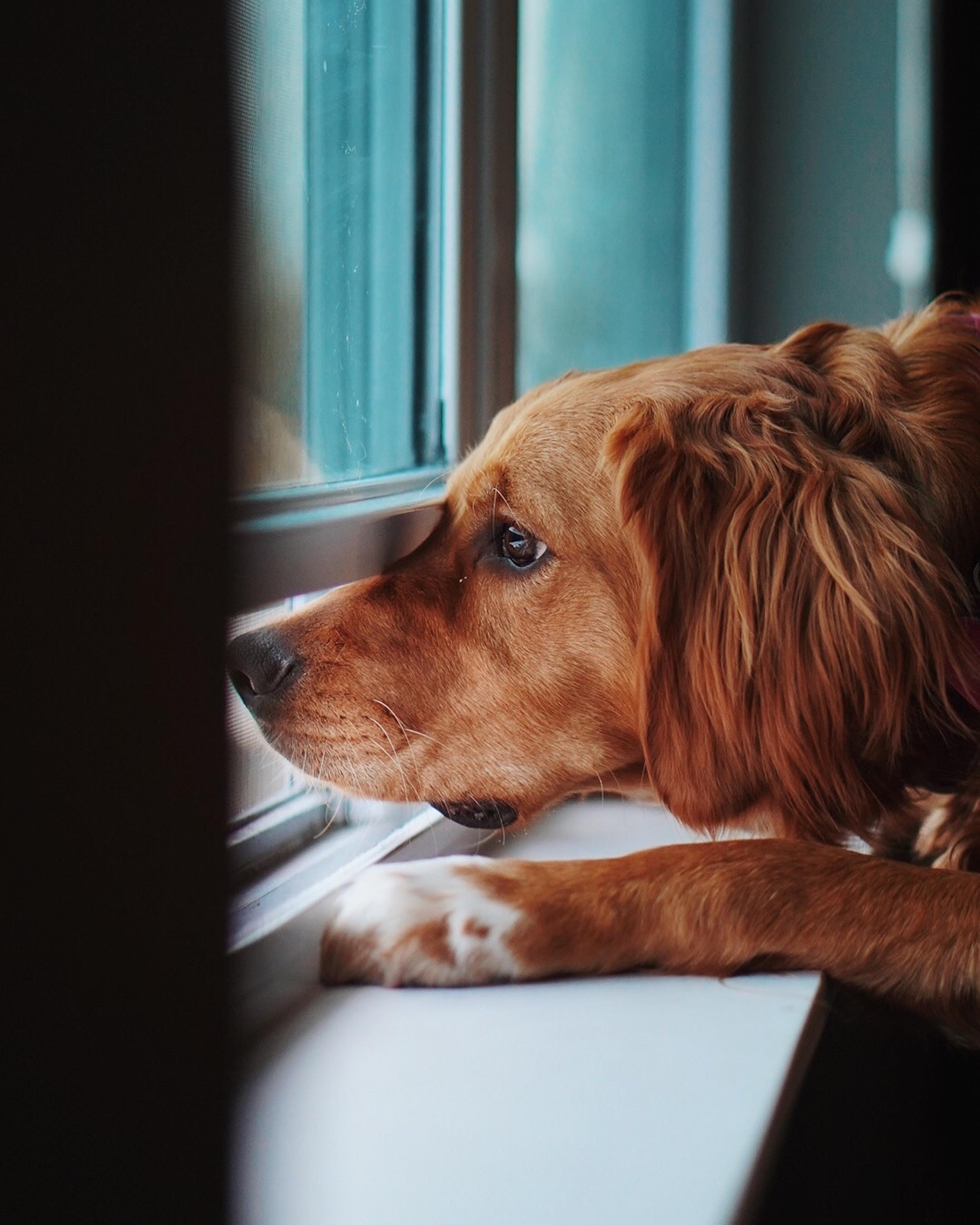 Hogyan téliesítsük kedvencünk kutyaajtaját?